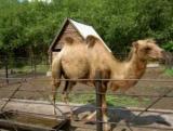 Зоопарк в Большеречье: від шкільного зоокуточка до державного зоосаду