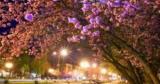Куда поехать весной: путешествуем по цветущей Украине