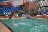 Ростовський дельфінарій: огляд, особливості, контакти і відгуки
